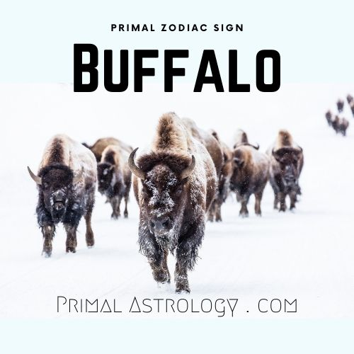 Primal Zodiac Sign of Buffalo