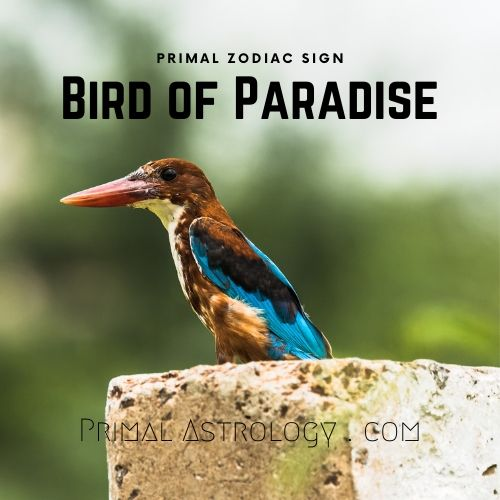 Primal Zodiac Sign of Bird-of-Paradise
