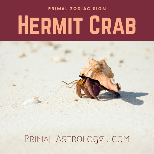 Primal Zodiac Sign of Hermit Crab