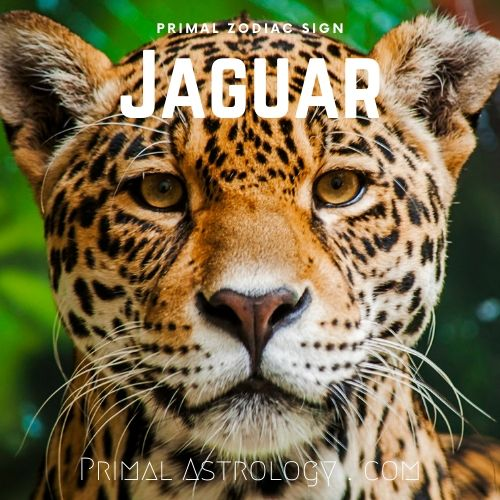 Primal Zodiac Sign of Jaguar