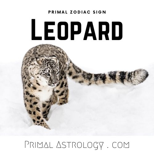 Primal Zodiac Sign of Leopard