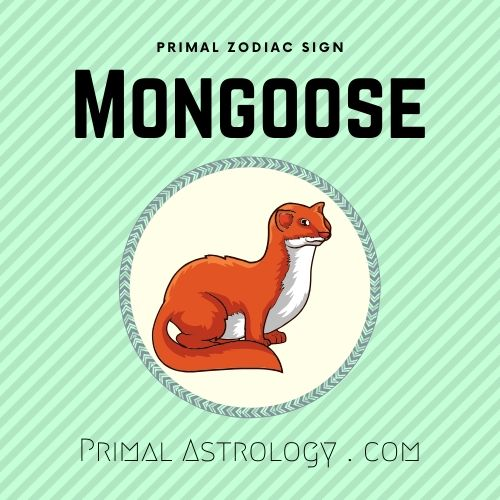 Primal Zodiac Sign of Mongoose