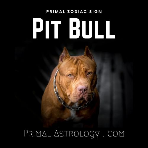 Primal Zodiac Sign of Pit Bull