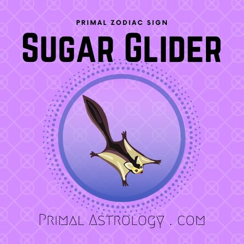 Primal Zodiac Sign of Sugar Glider