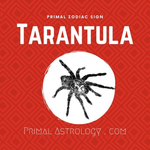 Primal Zodiac Sign of Tarantula