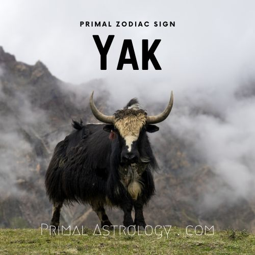 Primal Zodiac Sign of Yak